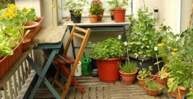 huerto-urbano-ecologico-casa-balcon-terraza-default