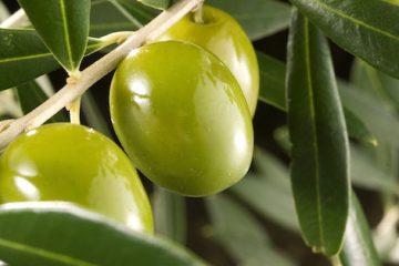 El producto de la semana: Aceite de oliva virgen - La Chinata