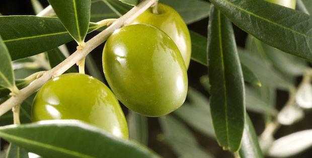 El producto de la semana: Aceite de oliva virgen con trufa – La Chinata