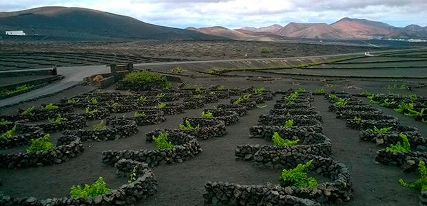 Lanzarote, tierra de vinos