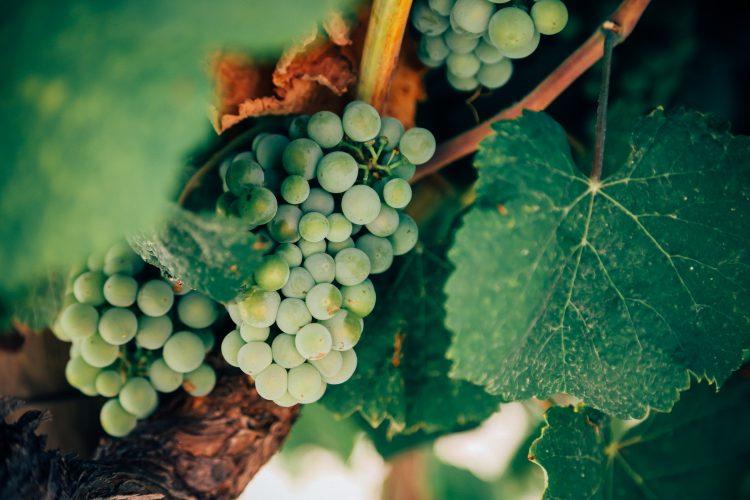 Juan Luis Garcia y Nacho Manzano: 4 vinos de Jerez que debes probar y su maridaje.