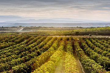 Azpilicueta: Un guía inmmejorable en el mundo del vino