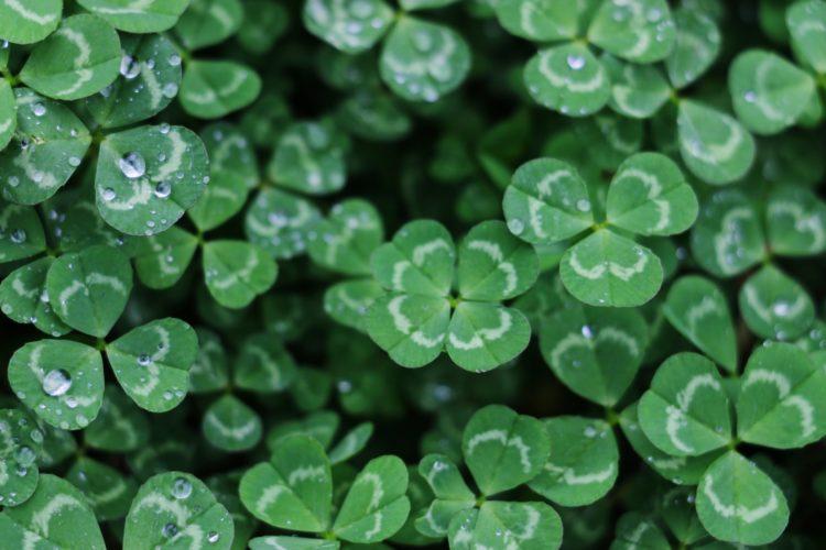 Siete amuletos de la suerte con el dinero y la abundancia